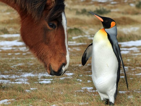 Horse and Penguin